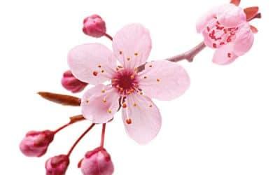 Frühlingshit – Geniessen Sie Wellness und Wohlbefinden!
