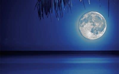 Mondscheinschwimmen